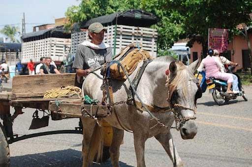 Plan para cambiar vehículos de tracción animal en Cali