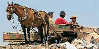 Policía Ambiental de Cali realizó operativos contra el maltrato animal