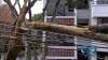 Caida de árbol dejó sin energía a un sector del barrio Nápoles