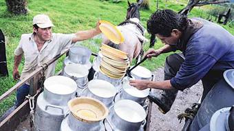 Sequía tiene en alerta a productores de leche en Nariño
