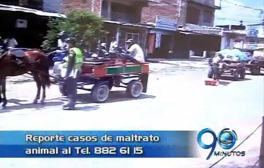 Policía incauta 8 caballos por maltrato animal