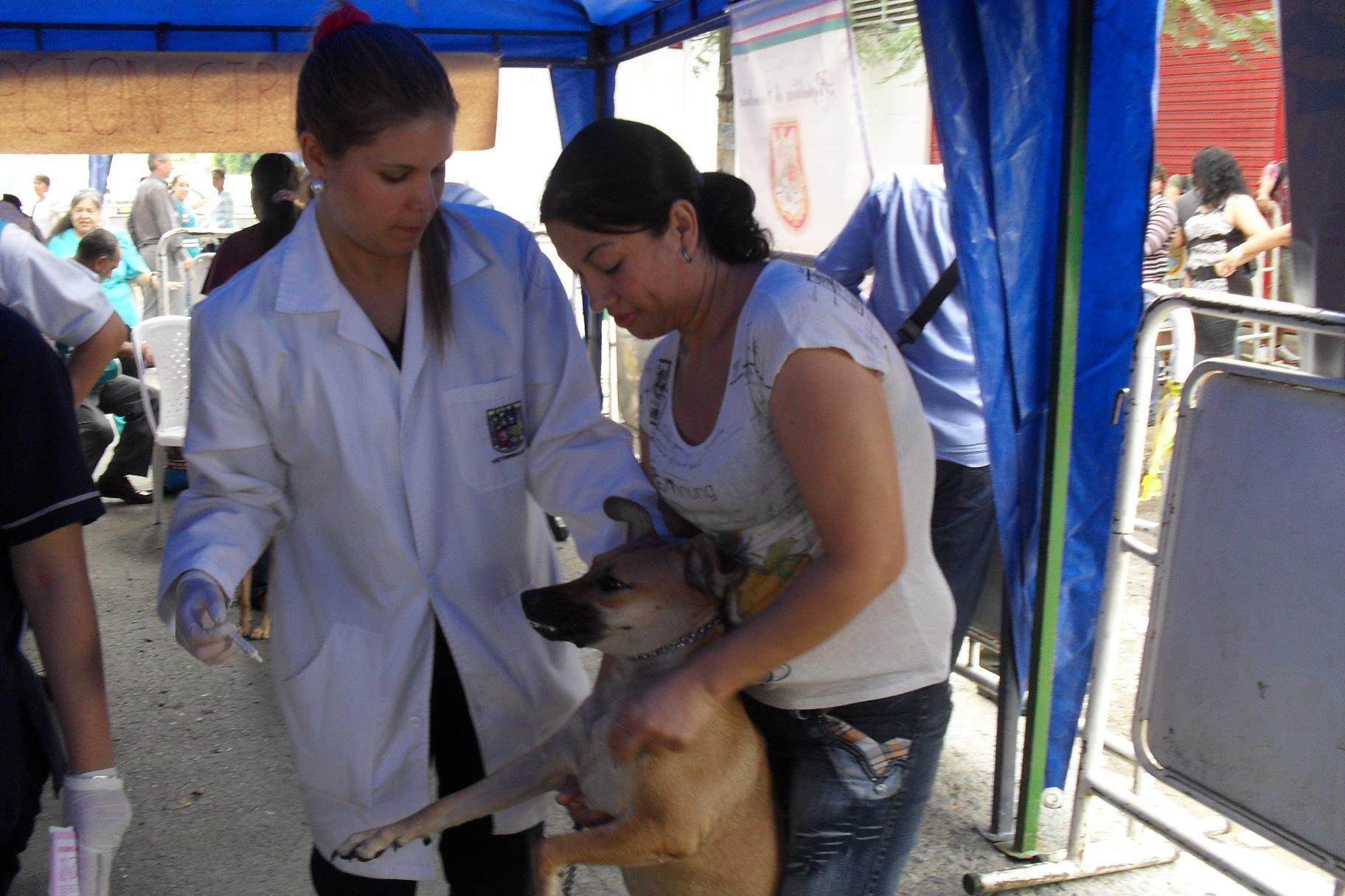 Vacunación antirrábica gratuita, para mascotas en Cali