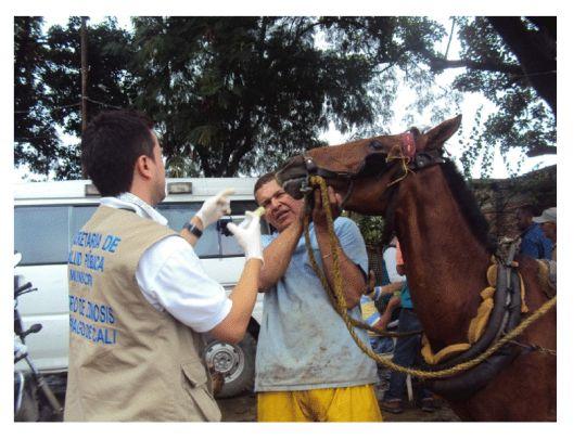 Realizan brigada de salud a caballos de carretilleros en Cali