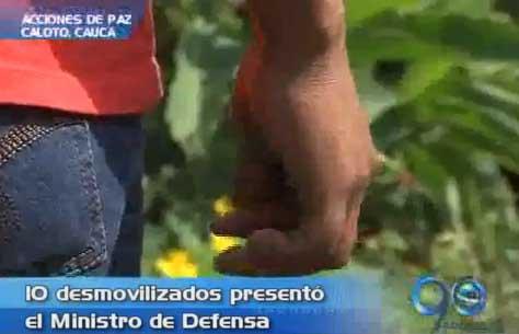 Se desmovilizaron 10 guerrilleros de las Farc en el norte del Cauca