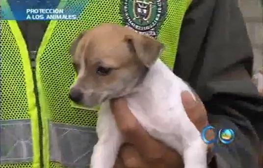 Listo proyecto de acuerdo para tenencia de animales en Cali
