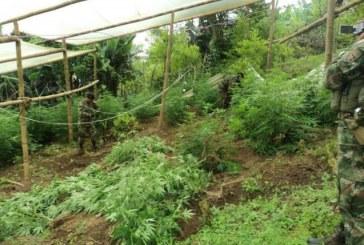 Ejército asesta otro golpe a estructuras del narcotráfico de las Farc
