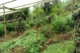 Defensor del pueblo pide a Estado que respete DDHH en erradicación de cultivos ilícitos