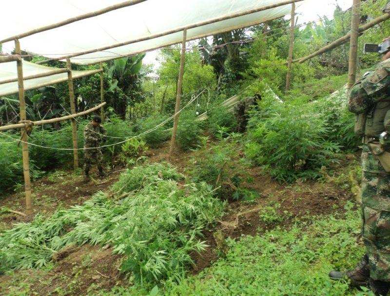 Esperan respuesta del Gobierno a propuesta de erradicación voluntaria y sustitución de cultivos de coca en Jamundí