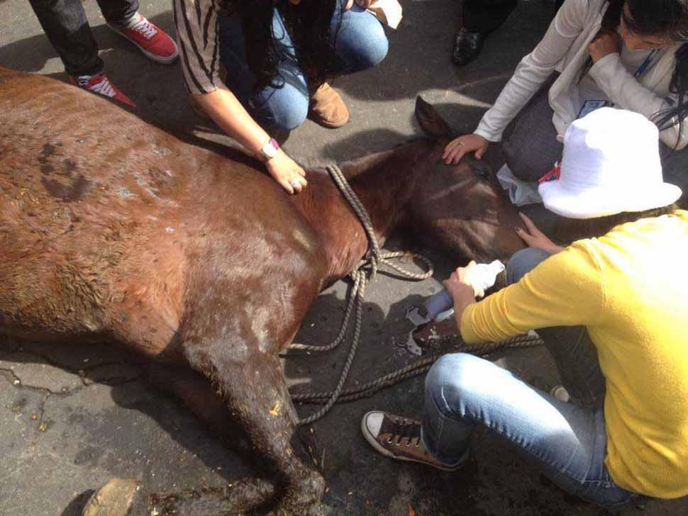 Festejo navideño beneficiará caballos maltratados en Cali