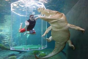 Experiencia de buceo con cocodrilos en Australia