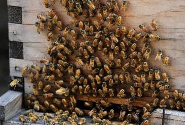 Por espantar un enjambre de abejas, incendiaron una casa