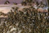 Ataque de abejas deja 50 menores heridos en Caloto