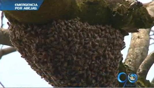 Bomberos recomiendan qué hacer con los enjambres de abejas