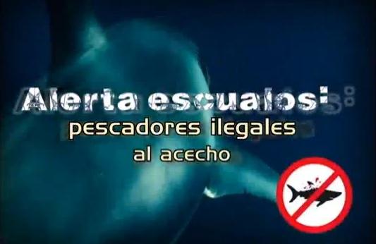 INFORME ESPECIAL: Pesca Ilegal de Tiburones en el Pacífico