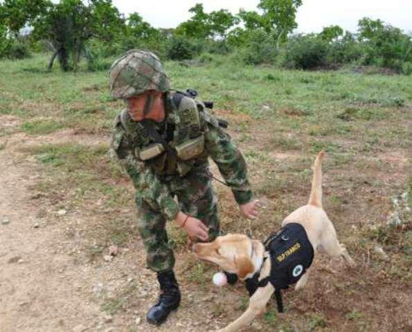 Un perro del Ejército encontró campo minado en el Cauca