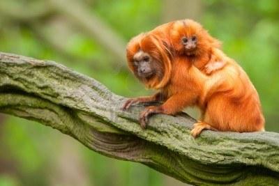 El Zoológico de Cali celebra la llegada de sus nuevos bebes