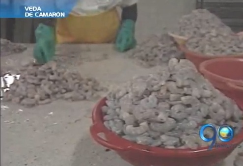 Autoridades toman medidas para controlar la veda de camarón