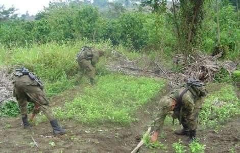 Incautadas dos caletas con armas las Farc en Valle y Cauca