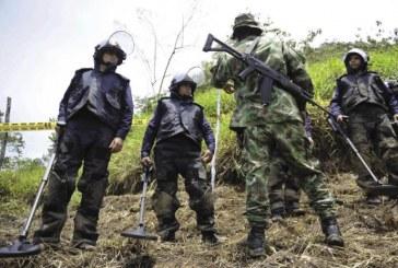 Desactivan artefactos explosivos de las Farc y el ELN