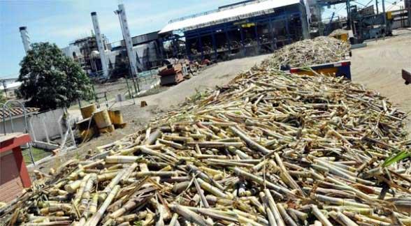 Abren investigación contra 12 ingenios azucareros en el Valle