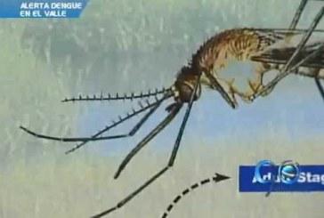 Alerta por casos de dengue en el Valle del Cauca