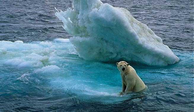 El cambio climático amenaza la diversidad del planeta