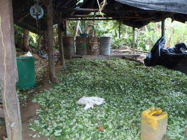 Ejército desmantela laboratorio de Cocaína en el Cauca