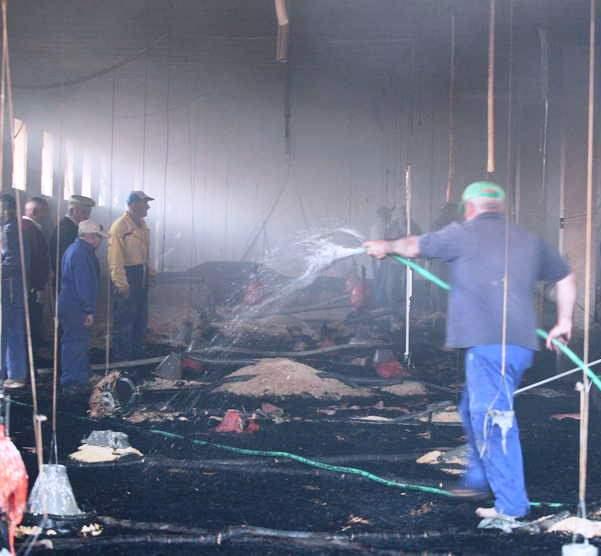 Más de 23.000 pollos murieron en incendio en Palmira