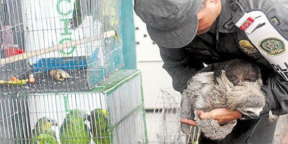 CVC entrega preocupante balance sobre tráfico de animales