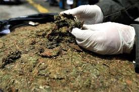 Decomisan seis toneladas de marihuana