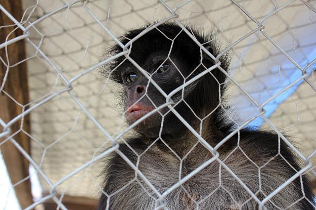 306 animales han sido recuperados en 2013 por tráfico ilegal y entrega voluntaria
