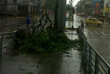 Apagones y caída de árboles por fuerte tormenta en Cali