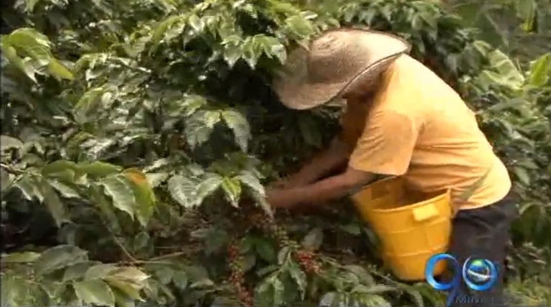 Comité de Cafeteros del Valle propone diálogo con el gobierno