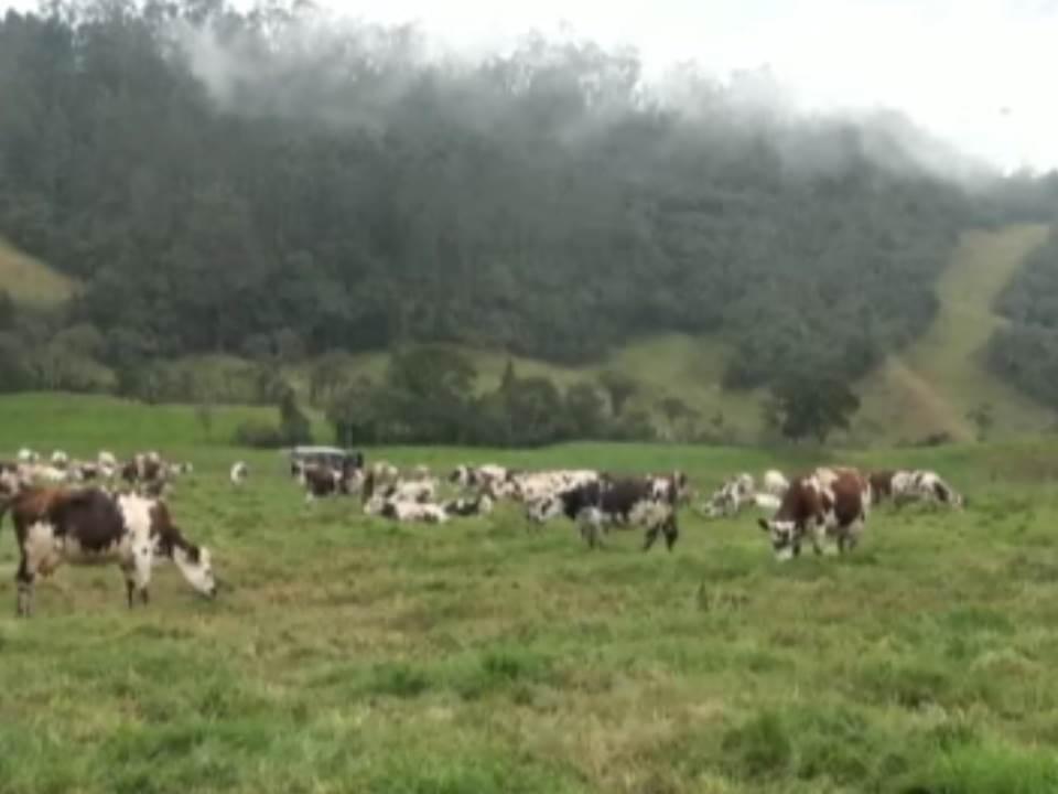 Colombia Innova: tecnología para optimizar la ganadería
