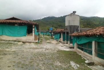 Cierran avícola en Buga por malas condiciones sanitarias