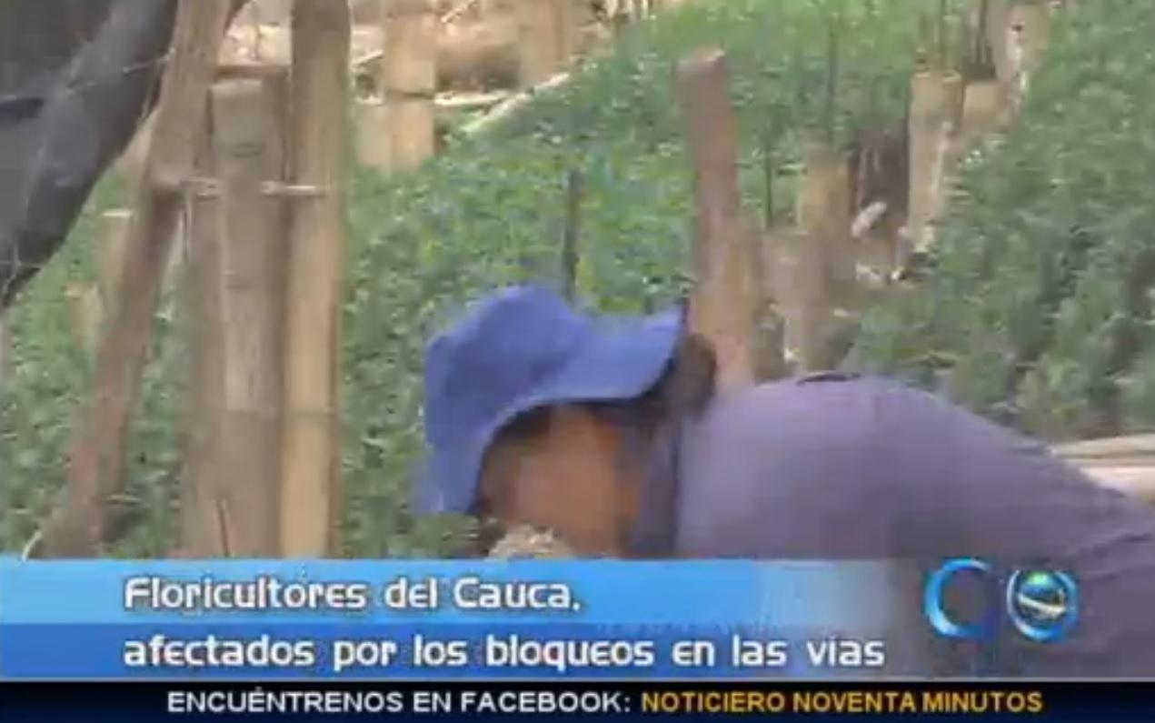 Floricultores del Cauca, afectados por el paro agrario