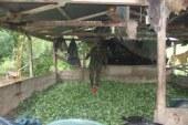 Destruido complejo de coca en Tumaco, Nariño