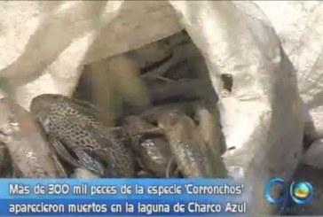 Problemática ambiental por muerte de peces en Charco Azul