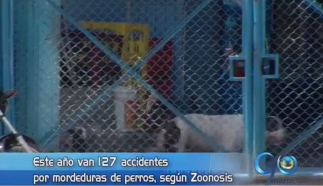 Se reportan 127 casos de mordeduras de perros durante 2014