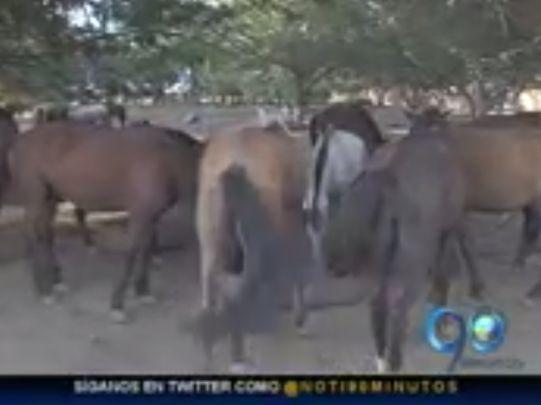 Muerte de caballos en Palmira tiene preocupado a las autoridades