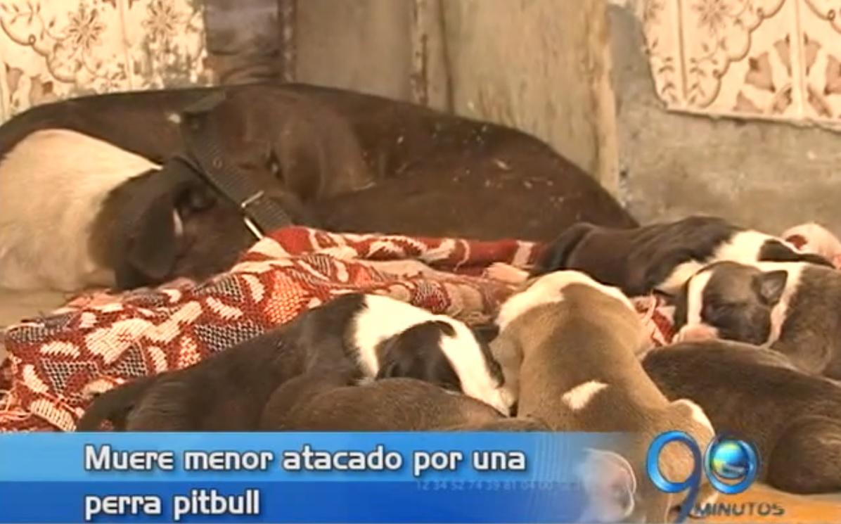 Perra pitbull causa la muerte de un menor