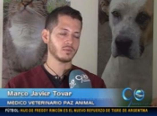¿Qué hacer con la pitbull que mató a un niño en Cauca?