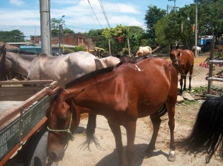 'Cacerolazo' a favor de la liberación de los caballos en Cali