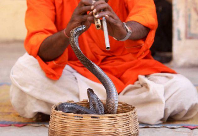 Encantador de serpientes murió luego de ser mordido por una cobra