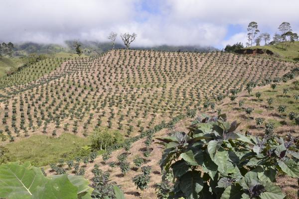 Primer Foro Regional organizado por la Sociedad de Agricultores de Colombia