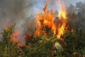 Incendio forestal en zona rural del municipio de El Cerrito.