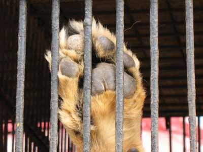 No más animales silvestres en los circos