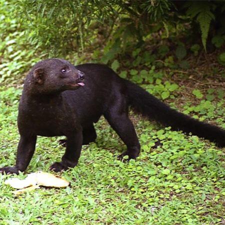 Descubren una nueva especie en el Parque Nacional El Vínculo
