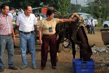 Alcaldía adjudicó 165 vehículos para sustituir carretillas