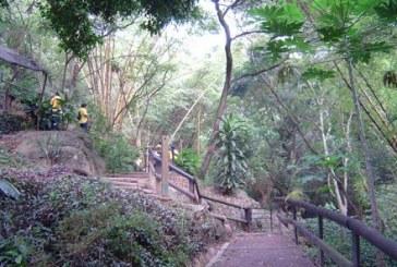 Se adelantó campaña de reforestación en el día del árbol